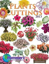 spring bedding plants hummert