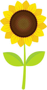 Image result for sunflowers clipart