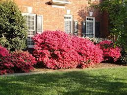 Azalea – Pruning Large Ones | Walter Reeves: The Georgia Gardener
