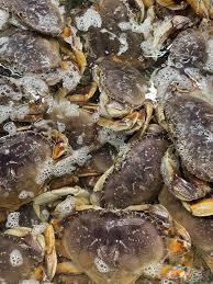 Nor Cal Seafood - Fish Market - Oakland ...