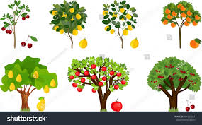 fruit tree clipart.  Fruit Trees Clipart Fruit Set Different Ripe Fruits Picture Freeuse And Fruit Tree Clipart L