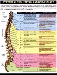Chiropractic Subluxation Chart Does The Vertebral Subluxation And Nerve Chart Used By