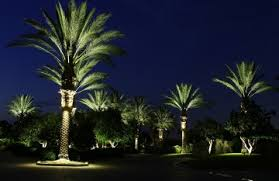 lighting palm trees fun tropical outdoor lighting. solar outdoor lighted palm trees communico consulting lighting fun tropical m
