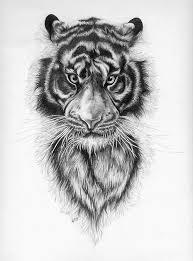 easy tiger pencil drawing. Delighful Pencil Easy Tiger Drawings Tiger By Annannas16 Inside Pencil Drawing Pinterest