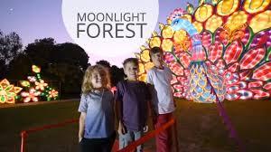 Alameda County Fairgrounds Christmas Lights Dazzling Outing Alameda Lantern Light Festival 510 Families