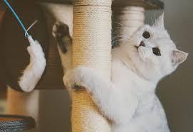 """Résultat de recherche d'images pour """"gif chat sur son arbre à chat"""""""