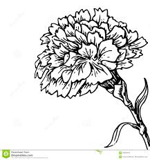 Carnation Flower Sketch Of Tattoo Stock Illustration