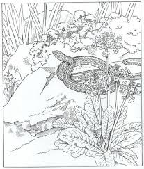 Garter Snake Northern Coloring Pages Print Coloring