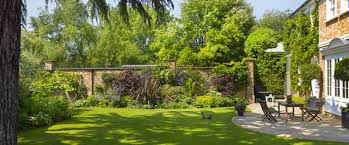 Small Picture Garden Planting Design London Garden Landscaping London Ginkgo