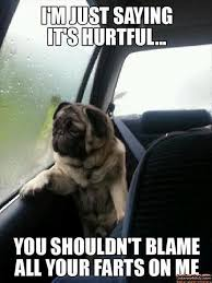 Blame Your Farts On The Dog - Funny Dog Picture - My Animal Rocks via Relatably.com