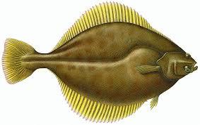 Sole (Flounder) | Wild Alaska Seafood