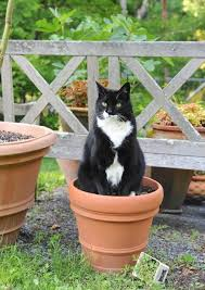 Keep cats out of house plants