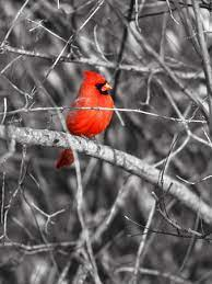 Northern Cardinal Bird On The Branch Photographic Print Snehitdesign
