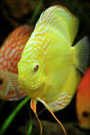 Freshwater aquarium  thelordismylightandmysalvation: . Beautiful  FishPretty ...