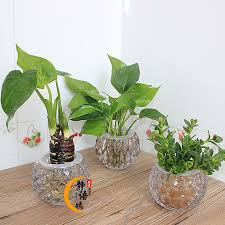 get ations goldfish spider plants potted plants indoor desktop hydroponic plants scindapsus lucky bamboo radiation xiaojiabiyu