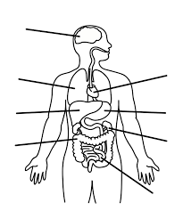 Body diagram with parts new human body diagram of body diagram with parts body diagram with