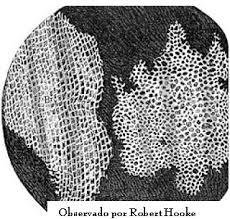 Resultado de imagen de robert hooke celula