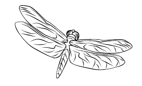 Free Dragonfly Coloring Page 3