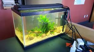 desk fish tank office back into freshwater with a tank on my office desk all plants desk fish tank office