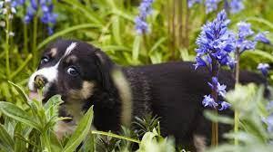 dog safe plants for your garden