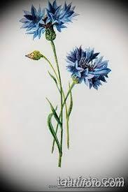 эскиз для тату цветок василек 31052019 065 Sketch Tattoo