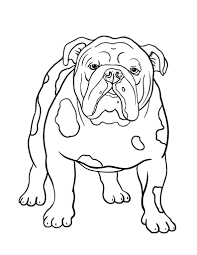 Small Picture Bulldog Football Coloring Pages Coloring Pages