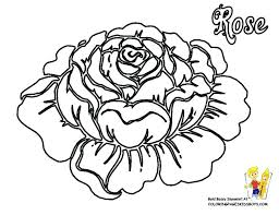 rose flower coloring pages also rose color pages flowers coloring pages roses free rose flower rose