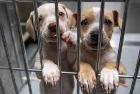 animal shelter pictures. Simple Pictures The New 35 Million Facility OC Animal Care In Tustin Opening To  The Public On Saturday Is Temporary Home Of These Two Pups On Shelter Pictures S
