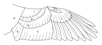 鳥類用語 Wikipedia