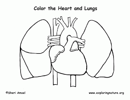 Small Picture Anatomy Coloring Book Heart Skeleton anatomy coloring pages human