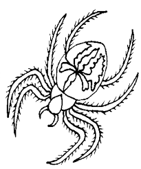 Small Picture Spider coloring Free Animal coloring pages sheets Spider