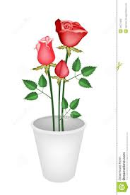 Illustration Red Roses in A Flower Pot