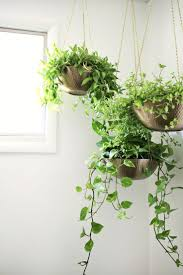 Best 25+ Hanging plants ideas on Pinterest | Hanging plant diy, Diy hanging  planter macrame and Diy hanging planter