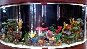 Image result for custom aquarium tank built