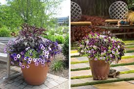 Small Picture Container Garden Design Home Interior Design Ideas 2017