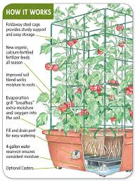 Husky Cherry Red Tomato A Best Seller Is Favored For Its Full Container Garden Plans Tomatoes