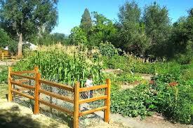 denver garden centers. Full Image For Regis University Community Garden Denver Urban Gardens Salary Roots Store Centers