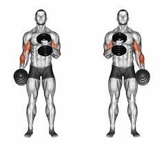 6 Best Free Weight Exercises For Bigger Biceps Food Fitness