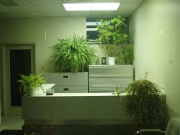 feng shui plants for office. Best Office Plants For Inspiring Unique Interior Potted Plant Ideas: Enchanting And Feng Shui