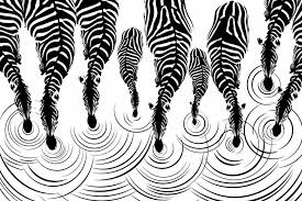 Small Picture Black and White 3D Zebra print Wallpaper Pattern Trendy