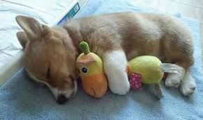 Image result for adorable puppies