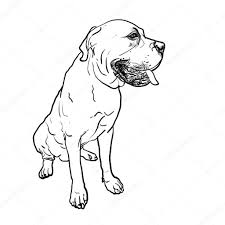 Rottweiler Pitbull Puppies Wiring Diagram Database