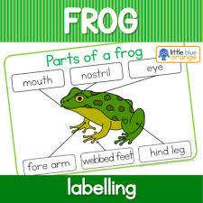 Parts Of A Frog Label The Frog Parts Of A Frog Worksheet By Little Blue Orange