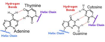 Hydrogen Bonding Examples Of Hydrogen Bonding Chemistry Examples