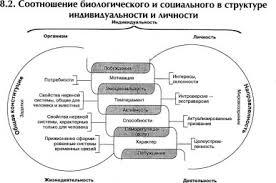 Социальная среда и личность это что такое Социальная среда и  Соотношение биологического и социального в структуре индивидуальности и личности