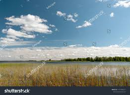 Midday Light Northern Lake Midday Light Cane Blue Stock Photo Edit Now