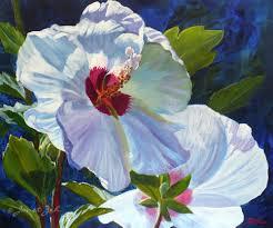 janet zeh original art watercolor and oil paintings white hibiscus flower fine art print