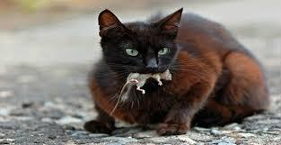 Esta página contém anúncios de cola pega rato ratoeira adesiva ribeirao preto sp. Como Fazer Armadilha Para Pegar Rato Livre Se Desses Intrusos