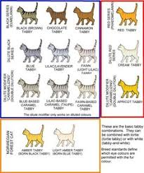 Cat Color Chart 23 Best Cat Coat Patterns Images In 2019 Cat Colors Cats