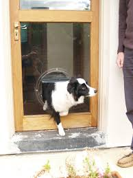 doggy door pet door cat flaps doggie doors perth wa